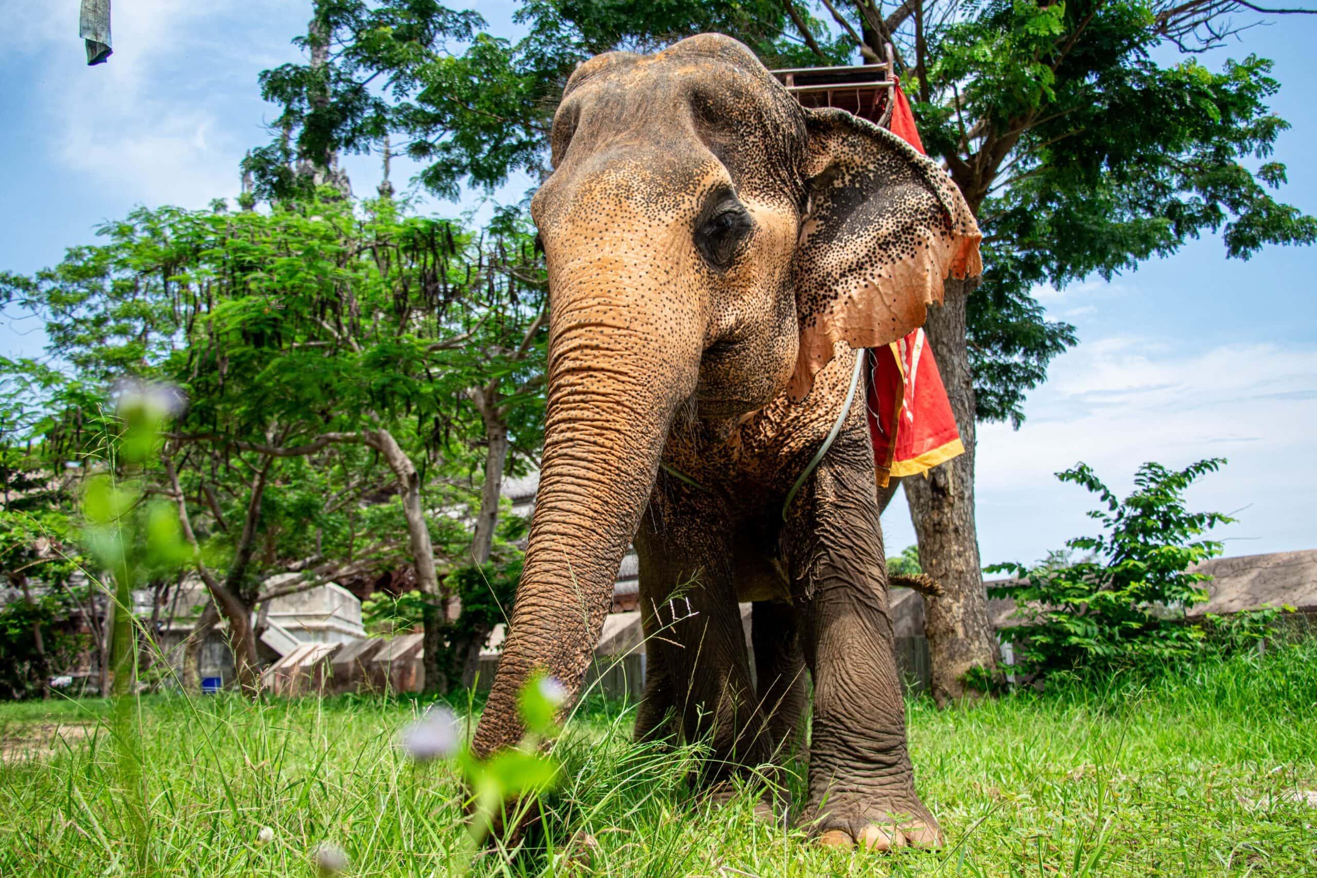 กิจกรรมขี่ช้าง